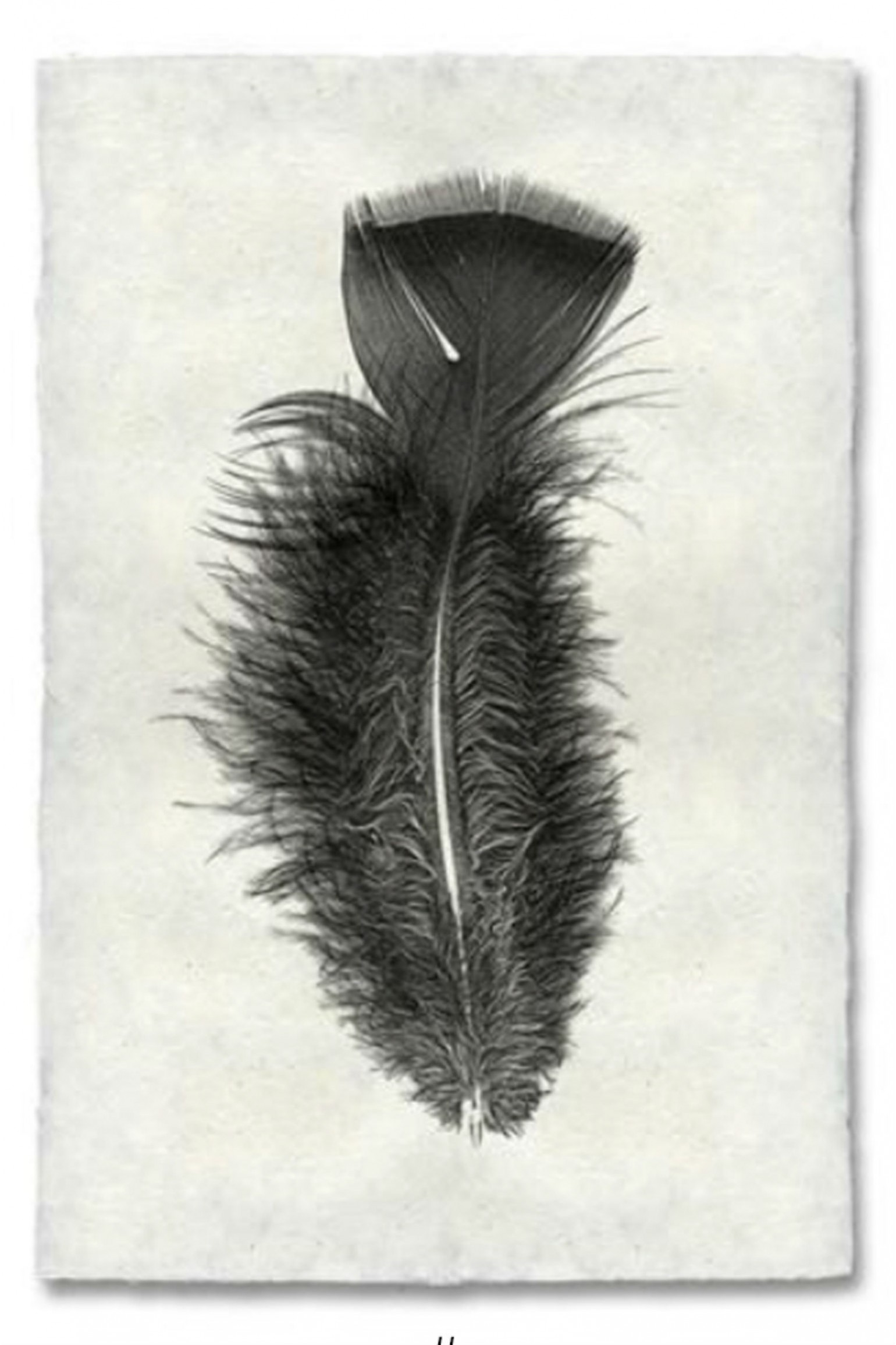 Saarde Barloga Feather Print #10 on Natural Paper