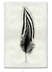 Atolyia Barloga Feather Print #2 on Natural Paper