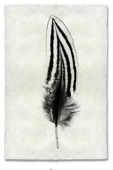 Saarde Barloga Feather Print #2 on Natural Paper