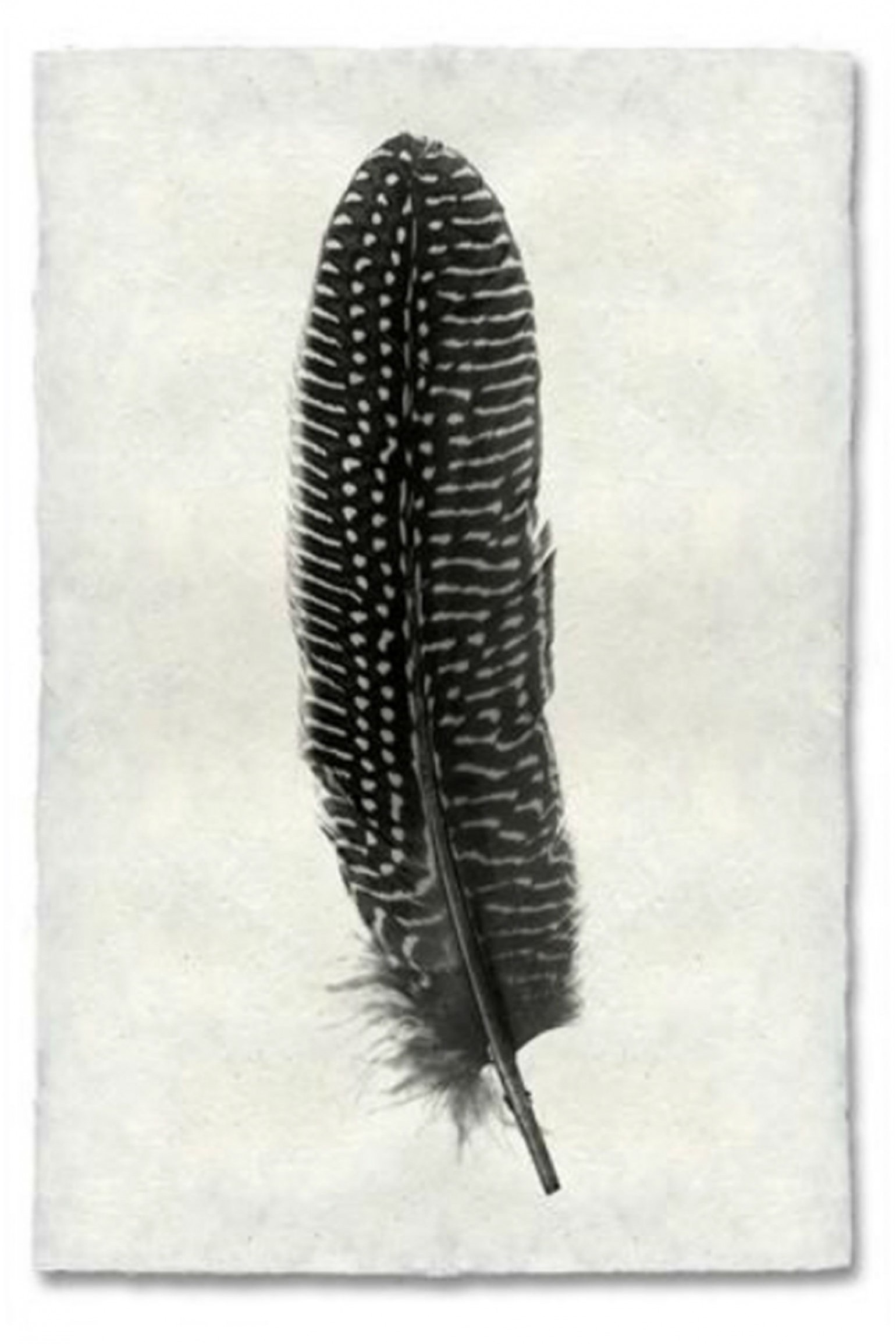 Atolyia Barloga Feather Print #5 on Natural Paper