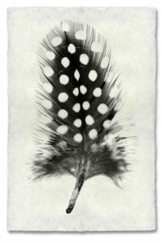 Atolyia Barloga Feather Print #1 on Natural Paper
