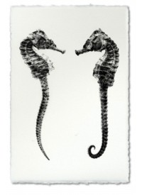 Atolyia Barloga Double Seahorse on Natural Paper